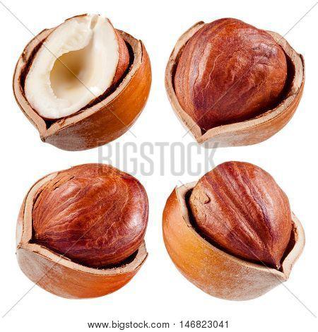 Hazelnut. Nut isolated on white background. Collection