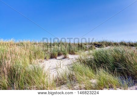 Beach And Dunes With Beachgrass In Summer