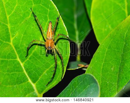 The Spider on the leaf is looking for victim.