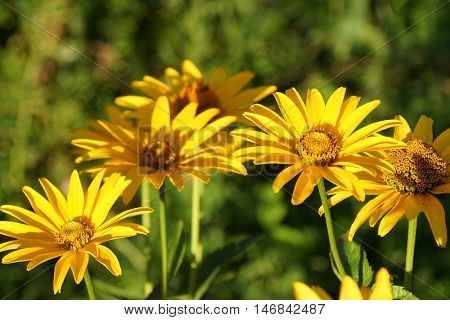 meadow, monoculture, clear, biofuel, agriculture,  spring,  flower, yellow, field,