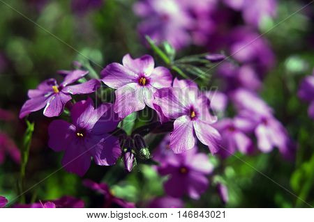 flowers, in, colors, beauty, nature, flowerbed, summer, plant, green, grass,