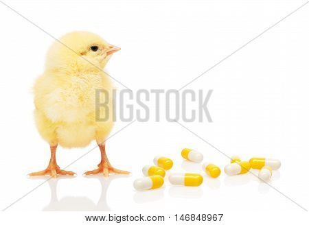Small Yellow Chicken Near Pile Of Yellow And White Capsules