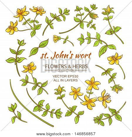 St.John's wort elements vector set on white background