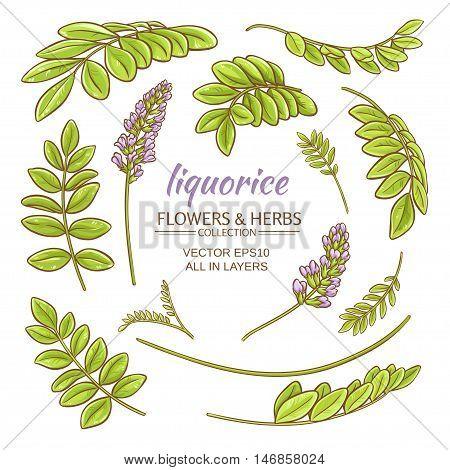 liquorise plant elements set on white background