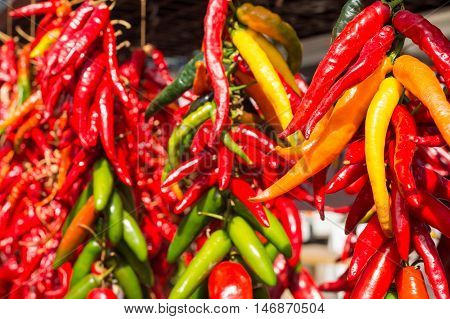 Bunches of chilli peppers hanging at the market