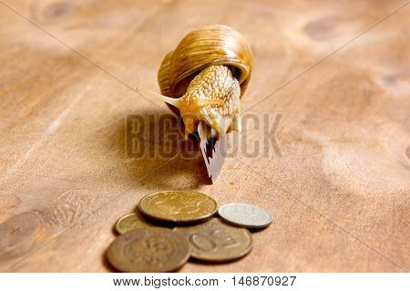 Garden snail creeps from a blade to the coins craving for profit