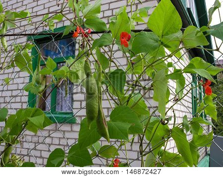 Curly decorative beans decorated with a grid on the border of the neighboring country sites