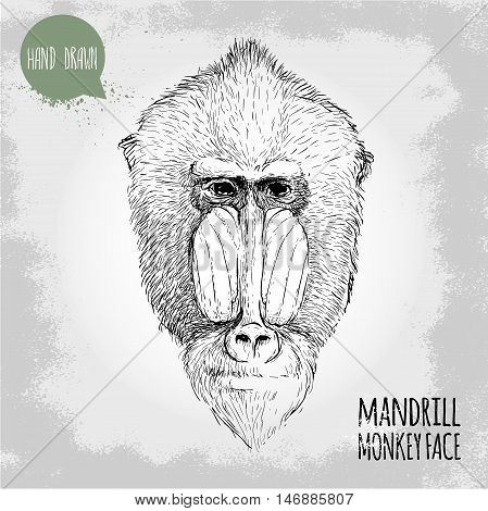 Hand drawn sketch style illustration of monkey face. Chinese zodiac sign. Mandrill male face. Dangerous monkey. T-shirt and placard design. Vector illustration.