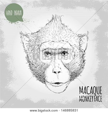 Hand drawn sketch style illustration of monkey face. Chinese zodiac sign. Macaque male face. T-shirt and placard design. Vector illustration.