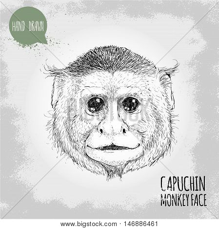 Hand drawn sketch style illustration of monkey face. Chinese zodiac sign. Capuchin monkey face. T-shirt and placard design. Vector illustration.