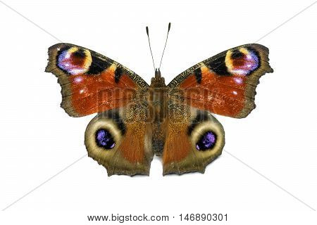 aglais io butterfly isolated on white background