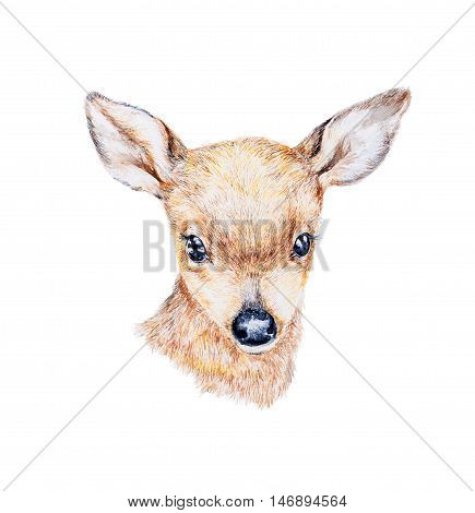 Watercolor painting of a small deer's head