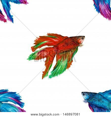 Siamese Fighting Fish On A White Background