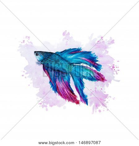 Siamese Fighting Fish On A Purple Background
