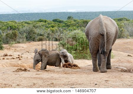 Smile Were On Camara - African Bush Elephant Family