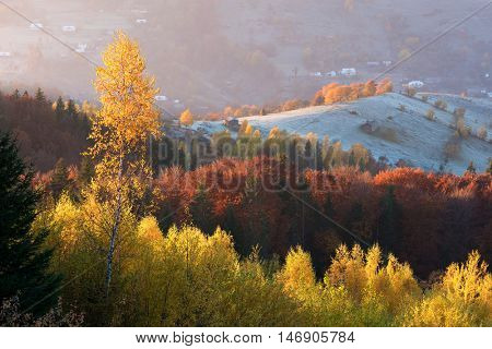 Autumn landscape with a beautiful deciduous forest in the mountains. Sunny weather in the morning. Carpathians, Ukraine, Europe