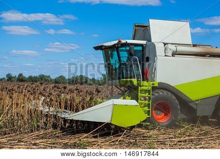 Big harvester in the field on a sunny day mowing ripe dry sunflower. Autumn harvest.