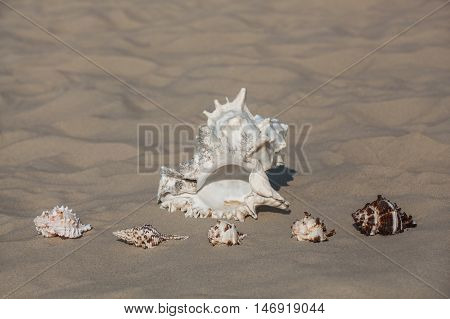 One large white to black spot and five small different color clam shells lying in the sand near the coast of the ocean or sea. Souvenirs of travel.