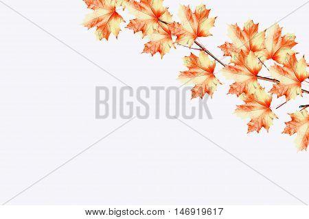 foliage isolated on white background. Golden autumn