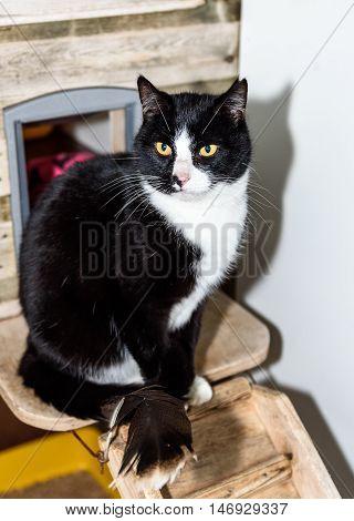 Homeless Cat Needs A Forever Home