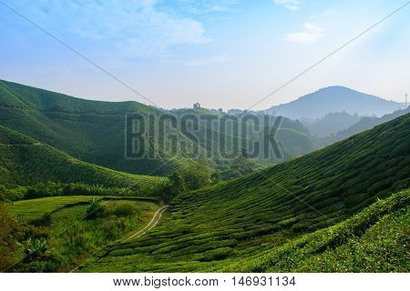 BOH Tea Plantation Landscapse, Cameron Highlands, Malaysia