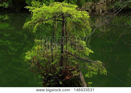a picture of an exterior Pacific Northwest seconds growth  conifer