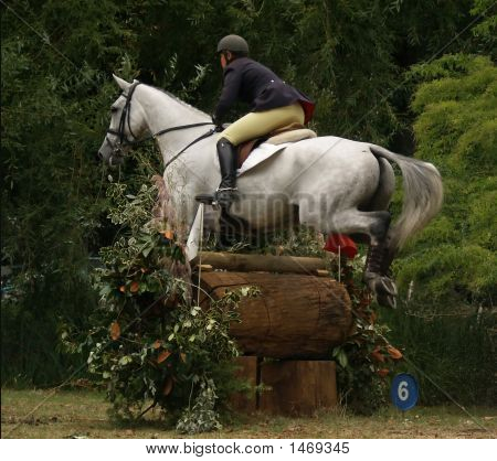 horse clearing