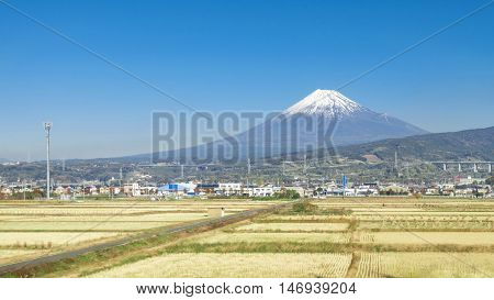 Mountt fuji with rice field and clear blue sky, japan