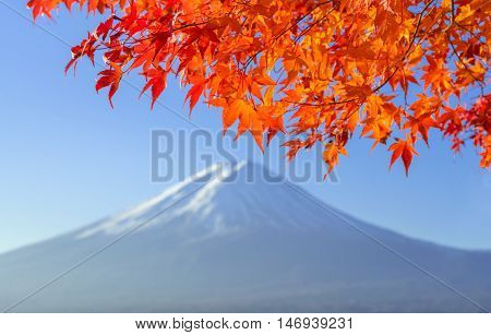 Red Maple Leave With Mt Fuji In Autumn Colors