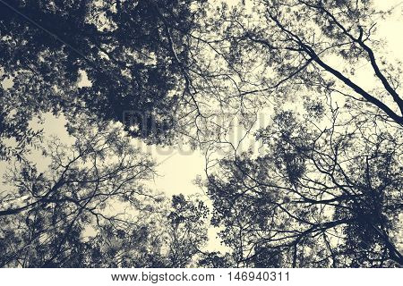 Trees Solitude Tranquil Nature Forest Tropical Concept