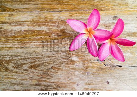 Pink spa flowers with copy space. Magenta plumaria on vintage wood background.