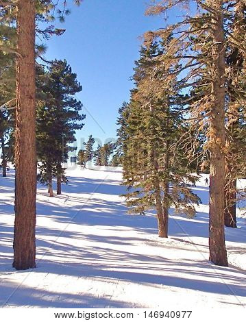 Beautiful winter woods scene with white snow on the ground and blue sky.