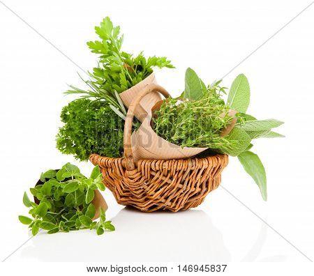 Fresh herbs oregano rosemary parsley and sage isolated on white background