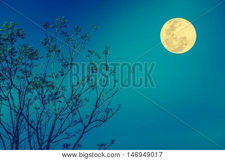 Silhouettes Of Tree Against Blue Sky And Beautiful Full Moon. Outdoor.