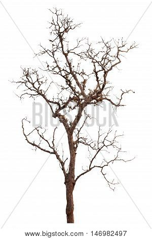 Silhouette Tree Isolated On White Background With Clipping Path.