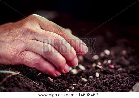 Hand of an elderly woman throwing seeds in the ground. Planting seeds in spring. Future concept.