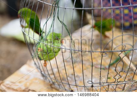 green parrots is perching in the cage on pet market.
