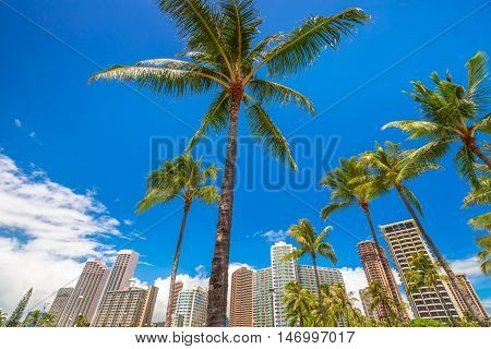 Honolulu city skyline with palm trees. Hotel and Honolulu skyscrapers in the area of Ala Wai Canal in Oahu, Hawaii.