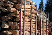 picture of logging truck  - A load of wooden logs on a logging truck trailer - JPG