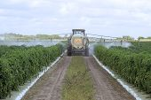 Spraying Pesticides - 1