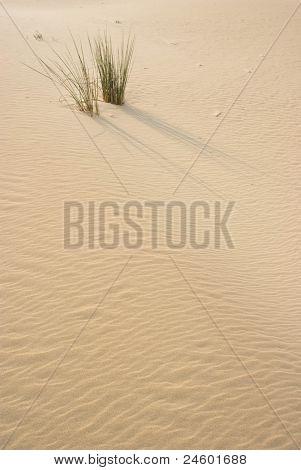 Grass on sand dune