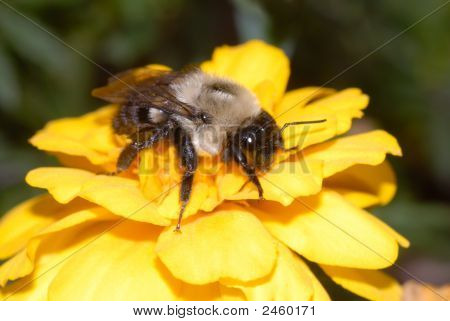 Bumble Searching