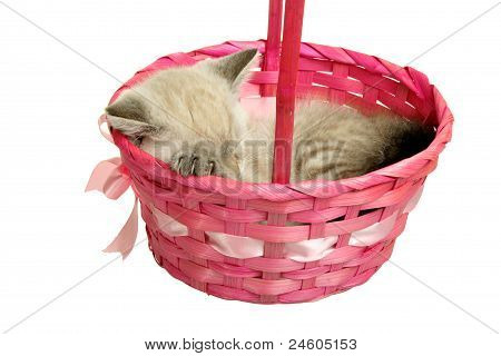 Kitten sleeping in a basket