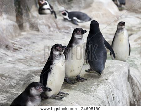 Penguins On Snow Ice