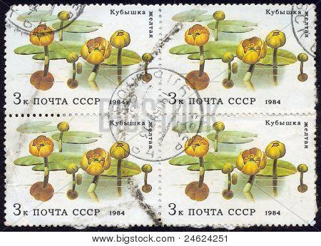 Stamps , Macro