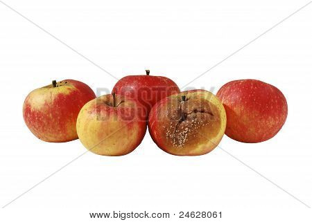 One Rotten Apple In Bunch Of Four