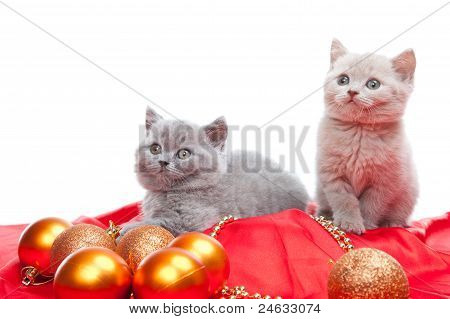 Two British Kittens Playing With New Year Decoration