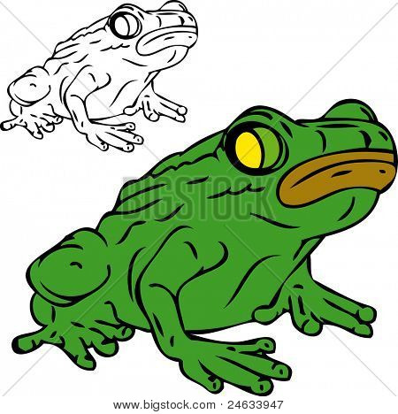 vector - frog isolated on white background