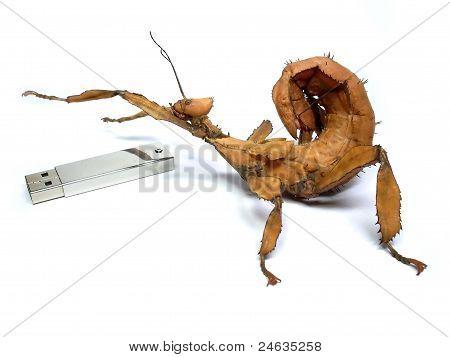 Insecto grande