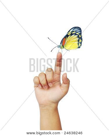 Butterfly On Woman's Hand.